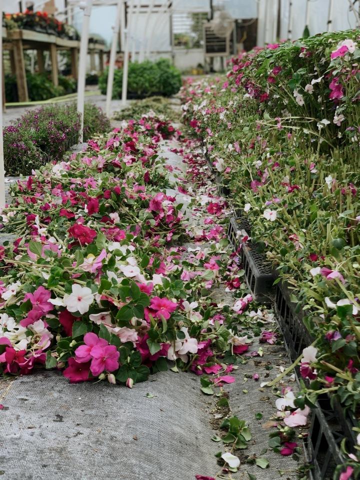 The Perfect Gardener